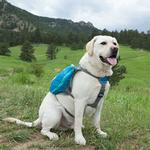View Image 2 of Outward Hound Daypak Dog Pack - Blue