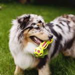 View Image 2 of Outward Hound Splash Bombz Bone Dog Toy