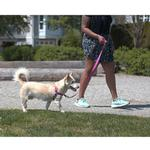 View Image 2 of Pace No Pull Dog Harness by RC Pet - Mulberry