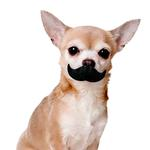 View Image 2 of Paci-Chew Mustache Dog Chew Toy
