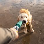 View Image 3 of Pacific Loop Dog Toy by RuffWear - Tumalo Teal