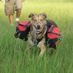 View Image 1 of Palisades Backcountry Dog Pack by RuffWear - Red Currant