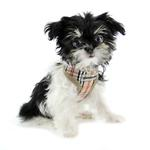 View Image 2 of Parisian Pet Freedom Dog Harness - Tan Plaid