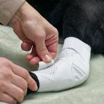 View Image 1 of PawFlex Joint Dog Bandages