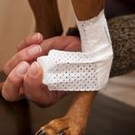 View Image 2 of PawFlex Joint Dog Bandages