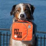 View Image 1 of Pet First Aid Kit by Canine Friendly