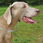 View Image 3 of PetSafe Gentle Leader Chic Headcollar with Leash - Bonez
