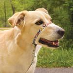 View Image 3 of PetSafe Gentle Leader Chic Headcollar with Leash - Donuts