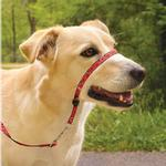 View Image 3 of PetSafe Gentle Leader Chic Headcollar with Leash - Poppies