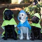 View Image 2 of Pitter Patter Packable Dog Rain Poncho - Lime Halftone