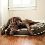 View Image 2 of P.L.A.Y. Camoflauge Round Dog Bed - Green