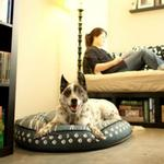 View Image 2 of P.L.A.Y. Dog on Wire Round Dog Bed - Blue