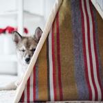 View Image 2 of P.L.A.Y. Pet Teepee - Horizon Woodland