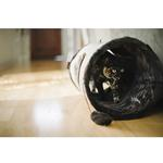 View Image 2 of P.L.A.Y. Purr and Pounce Cat Tunnel - Savannah Brown