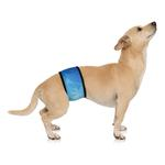 View Image 2 of Playa Pup Dog Belly Band - Palm Tree Blue