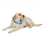View Image 2 of Playa Pup UPF50+ Reversible Dog Bandana - Palm Tree Blue/Royal Blue