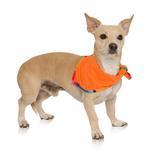 View Image 2 of Playa Pup UPF50+ Reversible Dog Bandana - Sarape/Tagate
