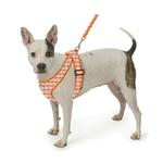 View Image 2 of Precision Fit Gingham Dog Harness - Orange