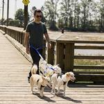View Image 2 of Primary Adjustable Dog Coupler - Royal Blue