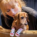View Image 2 of Puppet PAWks Dog Socks