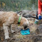 View Image 2 of Quencher Cinch Top Dog Bowl by RuffWear - Meltwater Teal