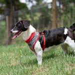 View Image 4 of Racer Dog Harness by Puppia - Red