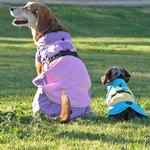 View Image 2 of Dog Raincoat Body Wrap by Doggie Design - Blue and Yellow