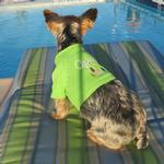 View Image 3 of Aspen Dog Sweater by Beverly Hills Dog - Green