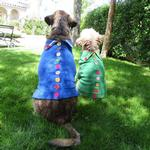 View Image 5 of Rainbow Button Dog Sweater by Beverly Hills Dog - Blue