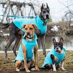 View Image 2 of RC Pet Baseline Fleece Dog Pullover - Teal and Orange