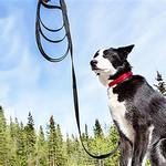 View Image 3 of RC Training Dog Leash - Black