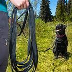 View Image 2 of RC Training Dog Leash - Black