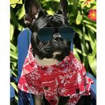 View Image 2 of Red Haze BBQ Dog Shirt by Dog Threads