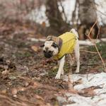 View Image 2 of Reversible Elasto-Fit Dog Raincoat - Yellow
