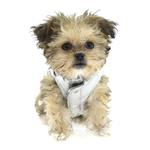 View Image 5 of Reversible Puffer Dog Vest by Hip Doggie - Silver Argyle