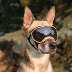View Image 2 of Rex Specs Dog Goggles - Desert Camo
