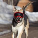 View Image 2 of Rex Specs Dog Goggles - Red