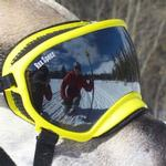 View Image 2 of Rex Specs Dog Goggles - Yellow