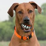 View Image 2 of Rogz Grinz Ball Dog Toy