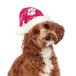 View Image 2 of Rubie's Santa Dog Hat - Hot Pink