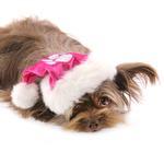 View Image 4 of Rubie's Santa Dog Hat - Hot Pink