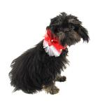 View Image 2 of Rubie's Valentine's Day Sequin Dog Necklace