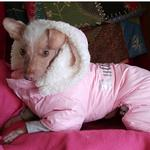 View Image 5 of Ruffin It Snowsuit by Doggie Design - Pink