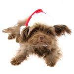 View Image 2 of Santa's Dog Hat by Puppia - Red