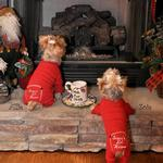 View Image 2 of Santa's Lil Helper Dog Pajamas by Doggie Design