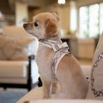 View Image 4 of Scotty Tinkie Dog Harness with Big Bow by Susan Lanci - Doe Plaid
