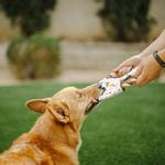 View Image 2 of Scout and About Flying Disc Rope Dog Toy - Vanilla