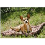 View Image 2 of Scout and About Outdoor Chill Pad Dog Mat - Mocha