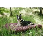 View Image 2 of Scout and About Outdoor Dog Bed - Mocha