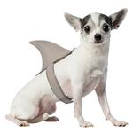 View Image 1 of Shark Fin Dog Costume by Rasta Imposta